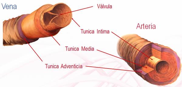 Módulo Formación: Flebitis Zero - Elección del acceso vascular